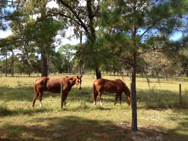 Picture of My Day – 63 – Horses in Lake Mary