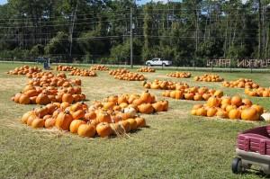 Lakeside Fellowship Pumpkin Patch Sanford