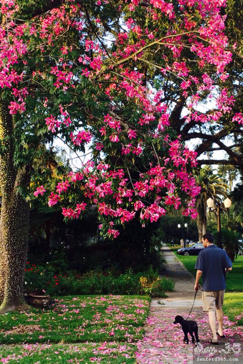Day 35 – Fall is Blooming in Sanford