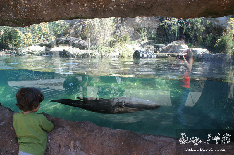 River otters at the Sanford FL Zoo