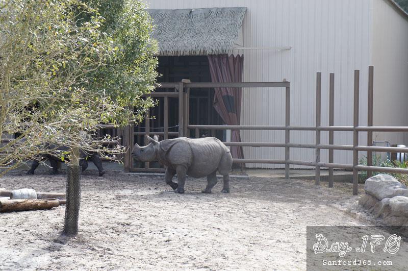 Rhinos at the Sanford Zoo