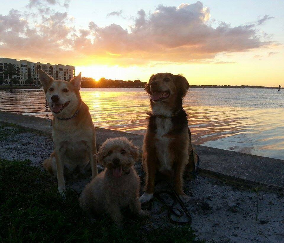 Dogs at Riverwalk by Dawn Thompson