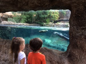 Things to do with kids in Sanford FL: Visiting the otters at the Central Florida Zoo